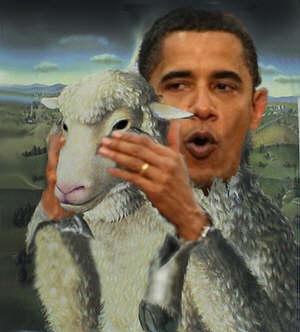 obama wolf